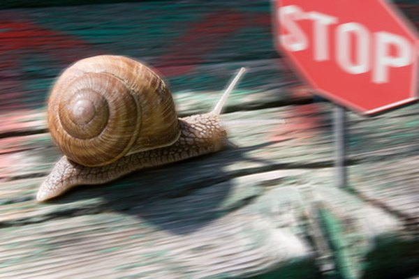 Race snails across different terrains when first-grade students study biology.