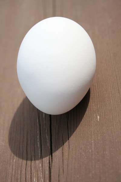Check the egg after one day.