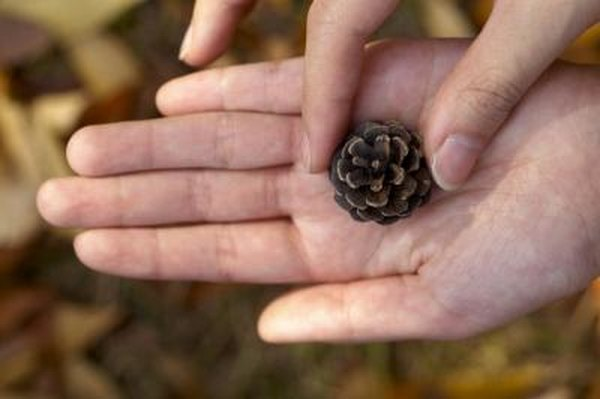 Woman holding pinecone