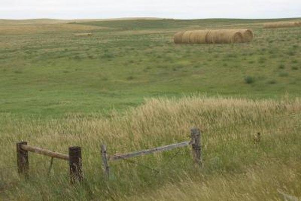 America's prairies are temperate grasslands.