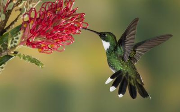 Birds play a part in pollination.