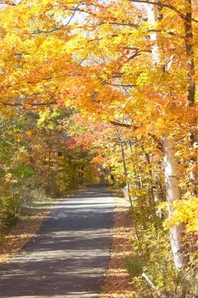 What Materials Are Used to Make Walking Trails?