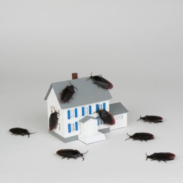 How To Get Rid Of Roaches In Your House
