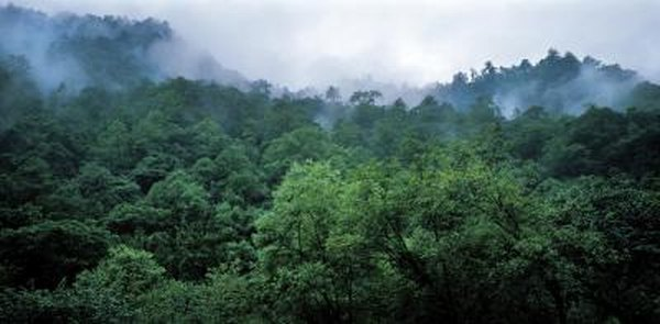 High angle view of a lush forest.