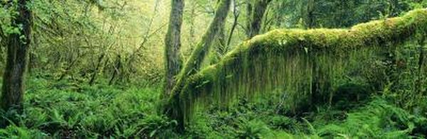 Dense rainforest.