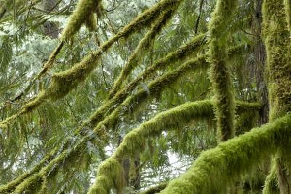 The moss plant reproduces by means of sperm and egg.