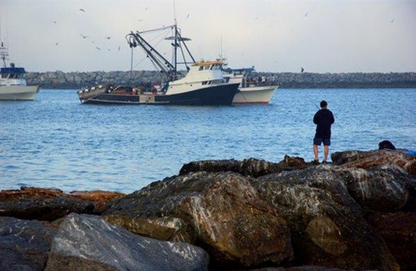 Overfishing threatens dolphin habitats.
