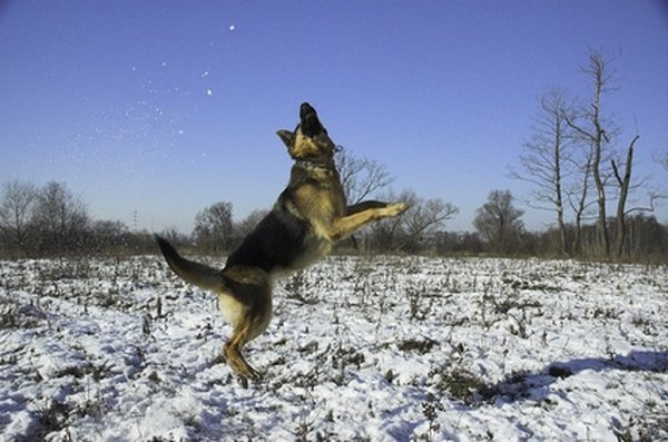 The more agile your dog is, the easier it is for him to get out of the fenced-in yard.