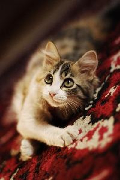outdoor cat repellent products