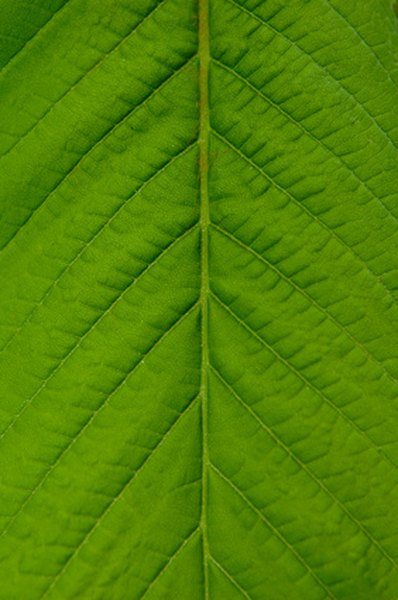 Tiny pores in the plant absorb carbon dioxide.