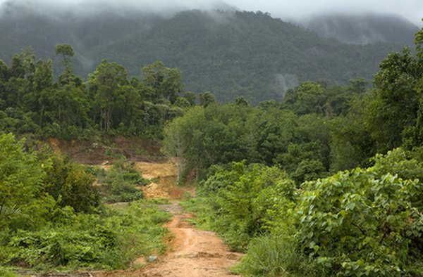 A rain forest showing misty rain in background