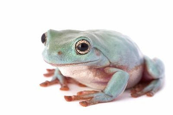 Anatomy Of The Internal Organs Of A Frog Animals Mom