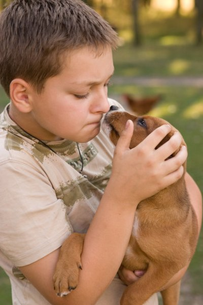 Small dogs are generally not recommended for children because kids may not be gentle enough.