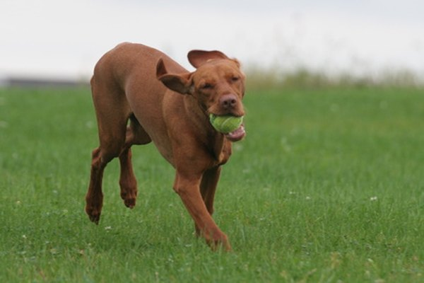 Exercise is a key ingredient to good health and longevity for your dog.