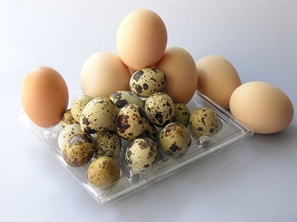 are eggs healthy for dogs pets