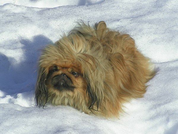 Even the furriest dogs need paw protection from the snow.