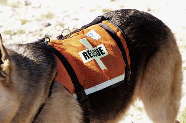Search and rescue dogs help humans in trouble.