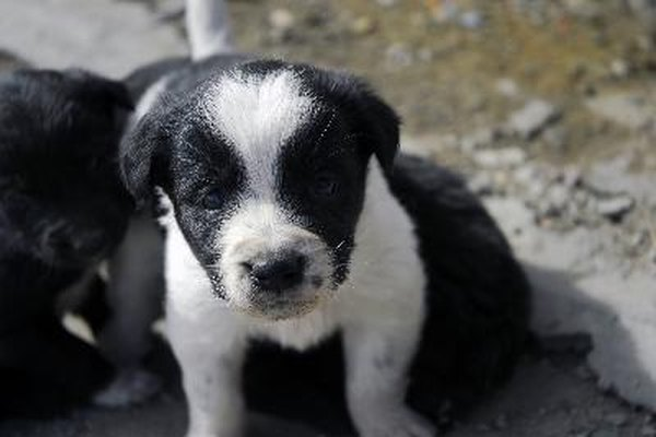How Long Do New Puppies Need To Nurse Pets
