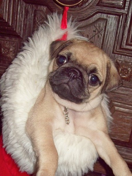 Christmas Dog Toy