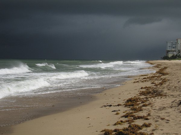 The best shelling is after a storm.