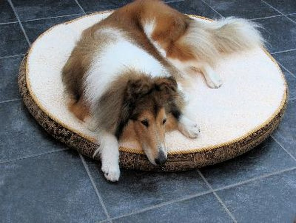 Depressed dogs spend much more time sleeping than they normally do.