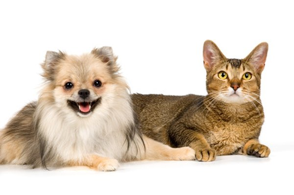 A slow desensitization process can help dogs get along better with cats.