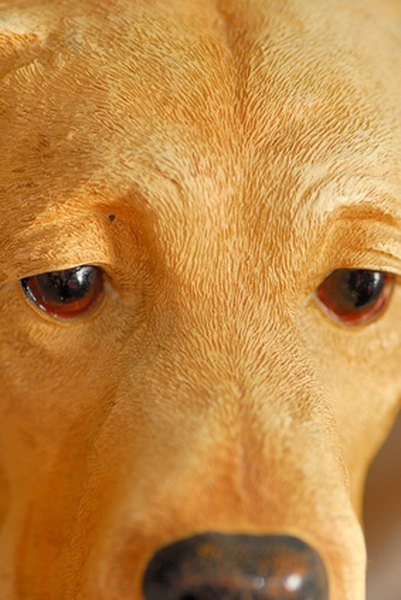 If your dog's eyes are inflamed and runny, his veterinarian needs to determine why.