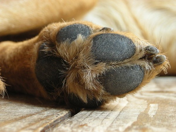 Dog paw, pad and nail health depend on routine care.