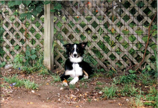 A secure fence and trained dog provide peace of mind.