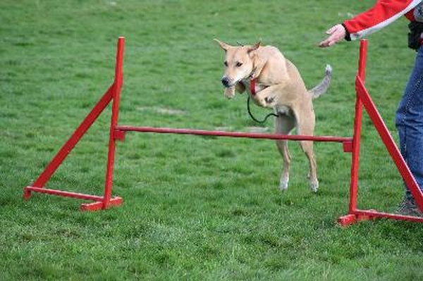 Active, work-oriented dogs thrive with an agility course.