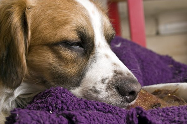 The decision to put your beloved pet to sleep has many factors to consider.