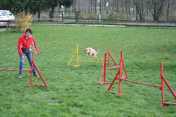 Keep obstacles minimal to build confidence in your puppy.