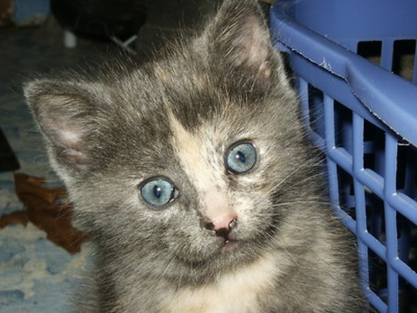 roundworms in kittens