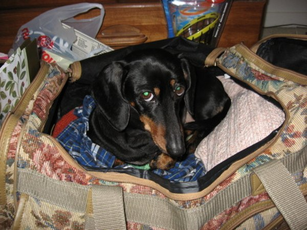 Your dog wants to go where you go, but if you're flying with your dog, you must plan ahead.