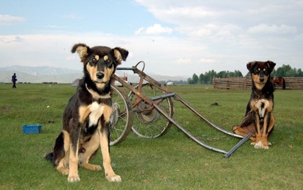 From ancient times until the 20th century, cart-pulling was an important job for some dogs.