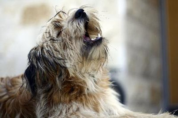 Filing a complaint about a barking dog can help get the situation under control.