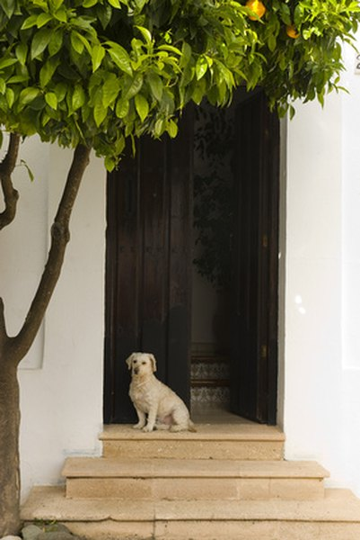 Screen Doors For Dogs Pets