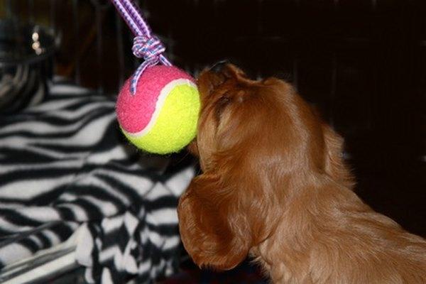 Offer the puppy plenty of toys and exercise to avoid destructive behaviors caused by boredom.