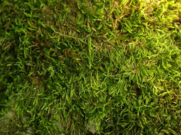 There are more than 10,000 species of mosses.