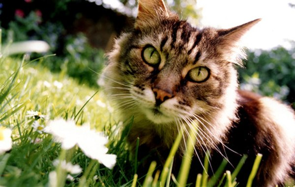 Outdoor Cats Bothering Your Indoor Kitty Can Be Repelled With Natural Nontoxic Substances