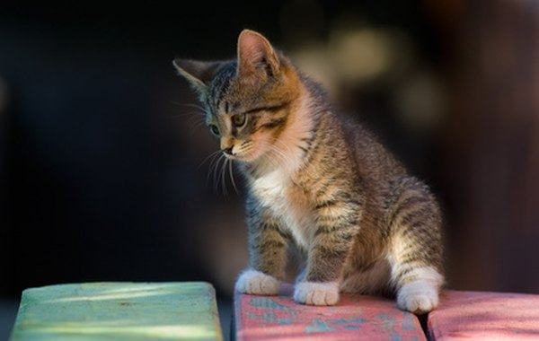 best kitten food brands 2015