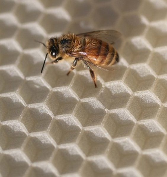 Make sure you know your state's laws regarding beekeeping.