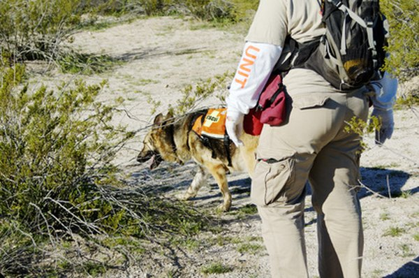 Search-and-rescue dogs perform a specialized form of tracking.