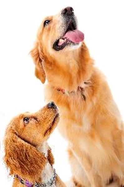Trace your dog's lineage through DNA testing.