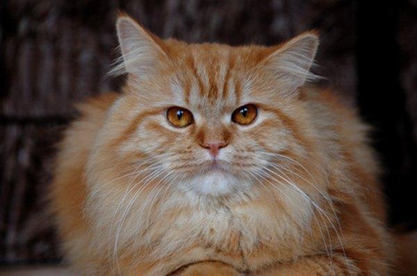 male cat spray odor