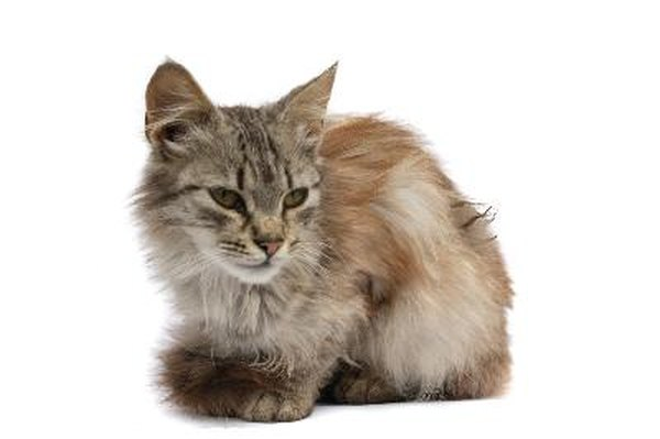 Geriatric cats fur grows back shaved suggest