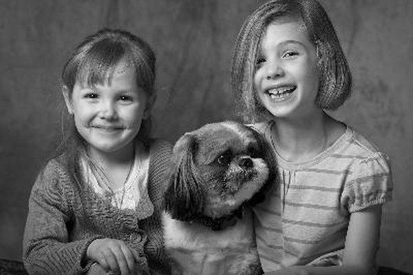 Bichon Shih Tzu Puppy Guide Pets