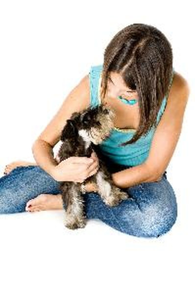 Therapy companion dogs must be comfortable being handled by strangers.