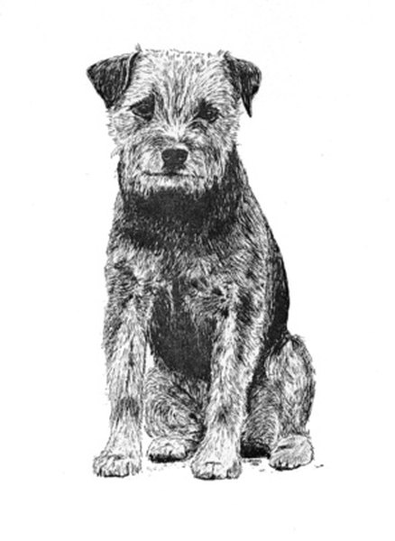 Border terriers are energetic little dogs, but they also occasionally like to sit and contemplate the world for a moment.