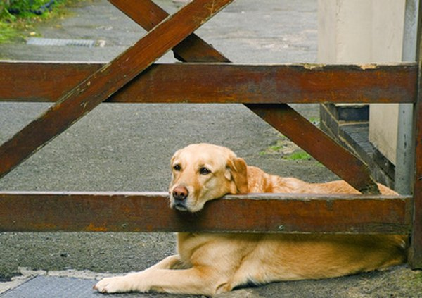 The presence of a large dog is likely to discourage visitations by bobcats.